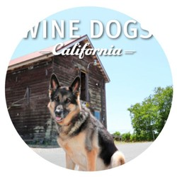 Wine Dogs of California 4